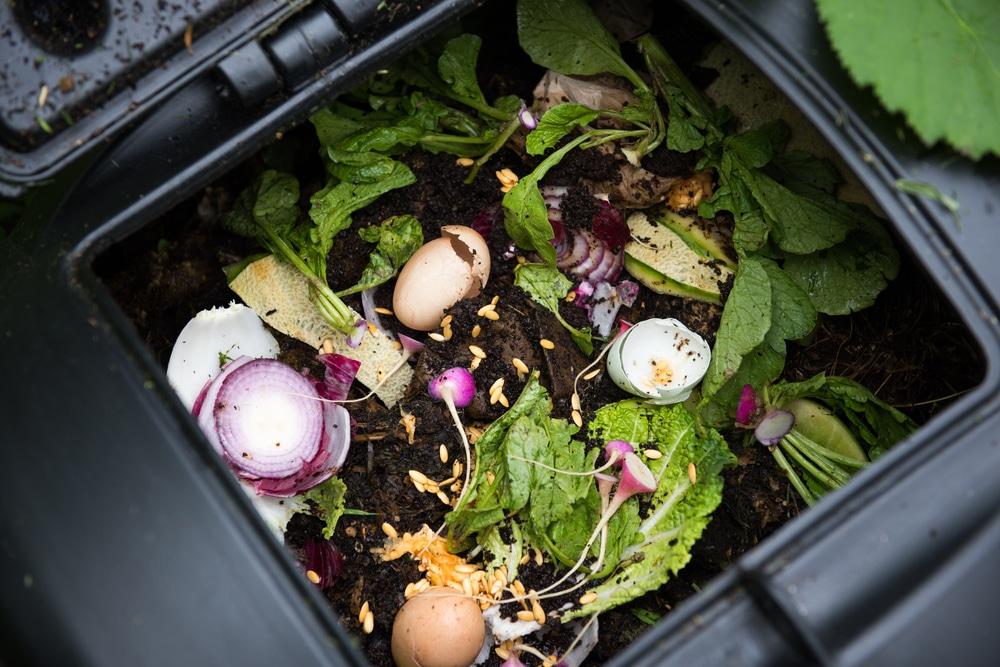 eggshells and greenery in compost bin