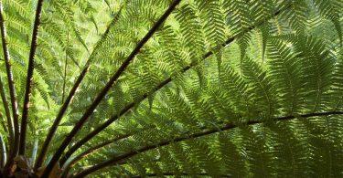 underside of a tree fern