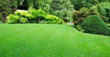 stunning garden lawn