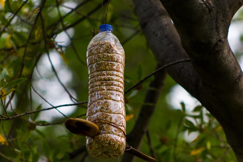 DIY plastic bottle bird feeder