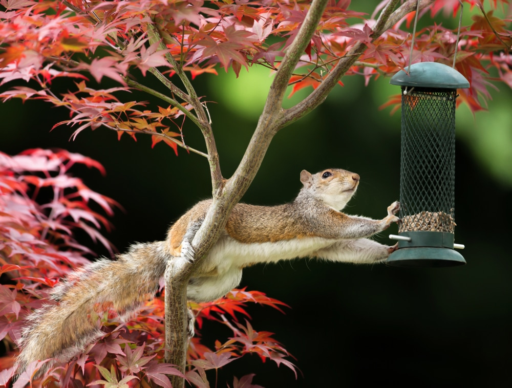 Squirrel grabbing the bird feeder
