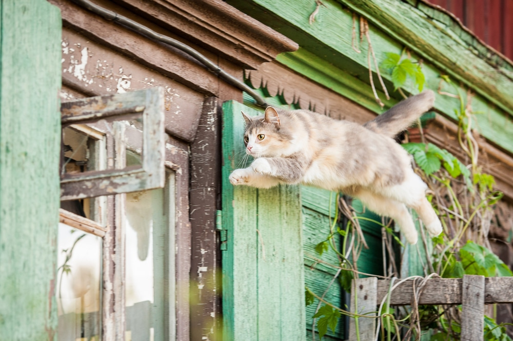 A cat jumping over a fence