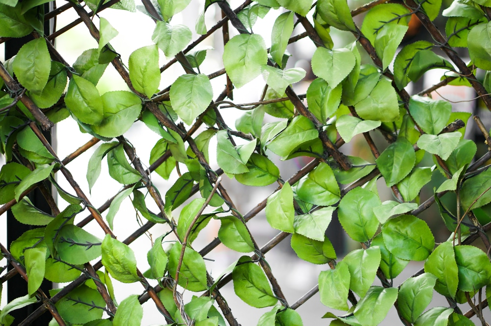 Garden trellis made from steel with intertwined plants