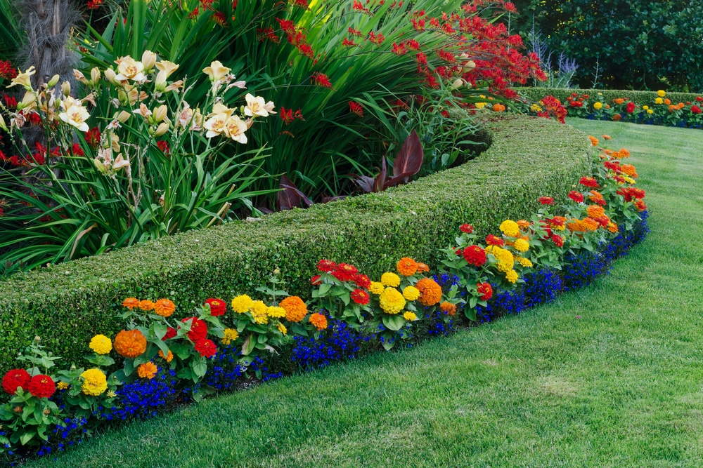 curved hedging with colourful flowers