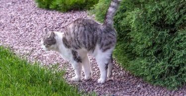 cat spraying in garden