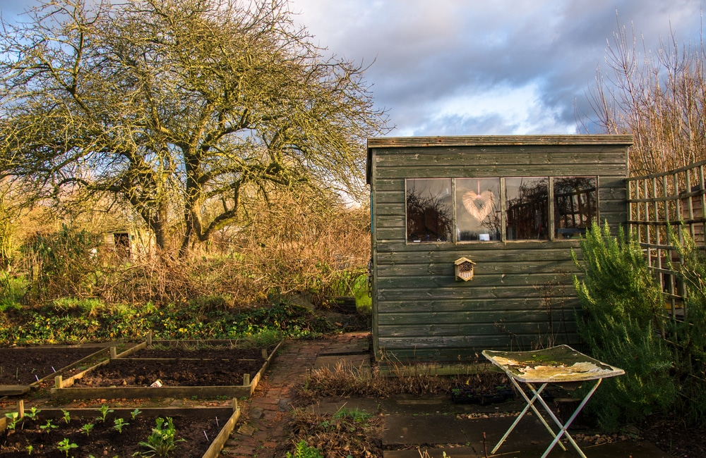 An allotment with shed and tree