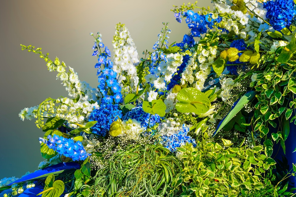 A floral composition of Delphiniums