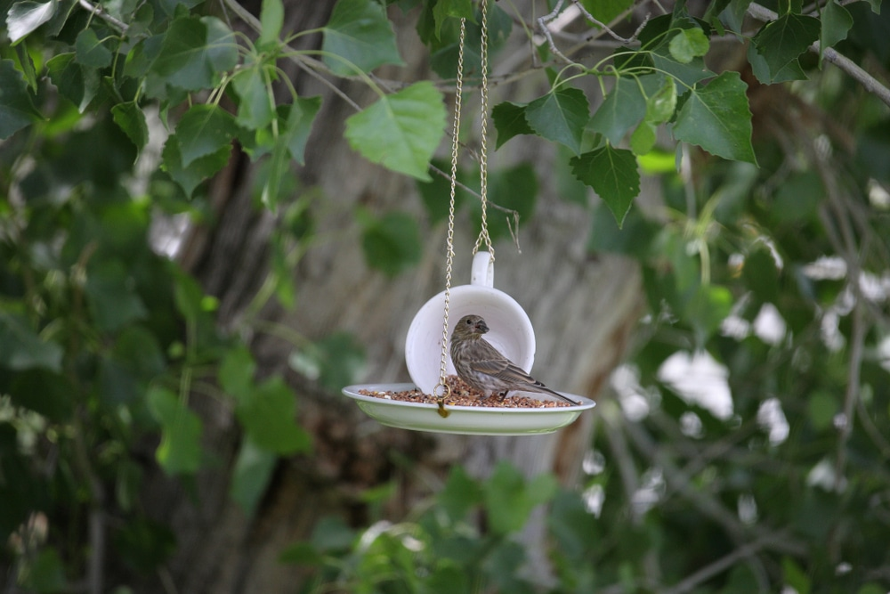 Bird sat in a home made DIY bird feeder on a string