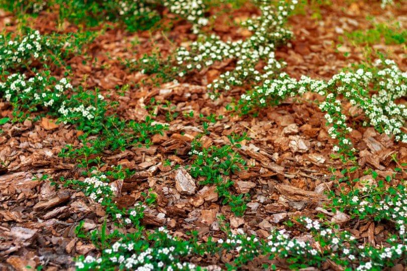 How To Mulch A Garden Properly Our Guide Upgardener