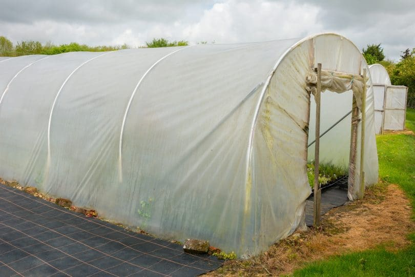 a homemade polytunnel greenhouse
