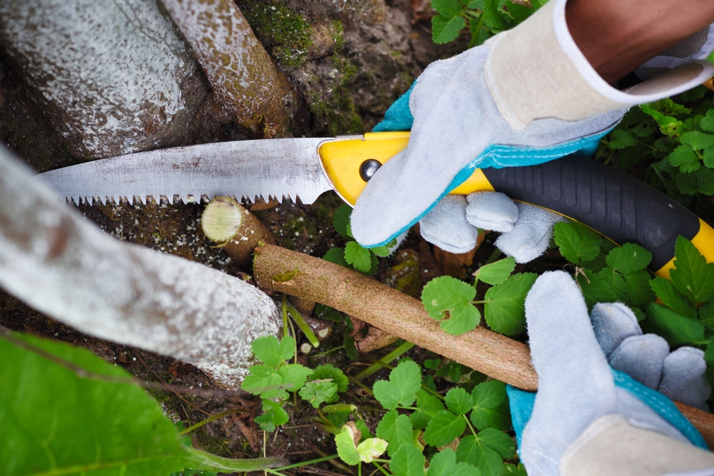 gardener with gloves using pruning saw to chop a branch