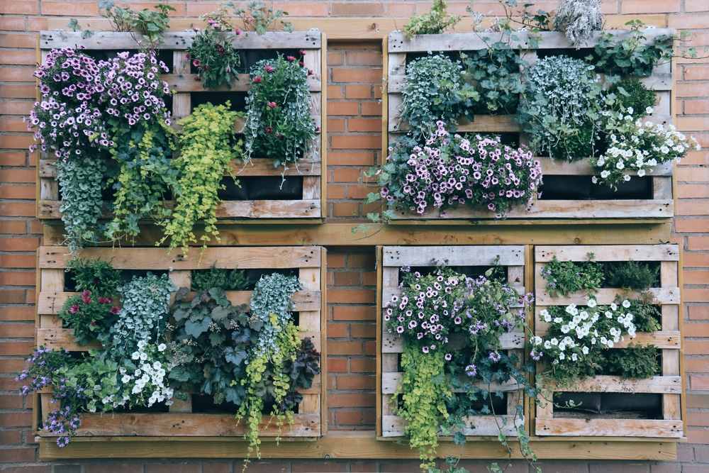 Pallets used as wall planters