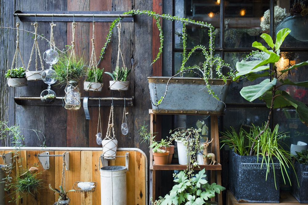 Plants arranged stylishly in a trendy garden