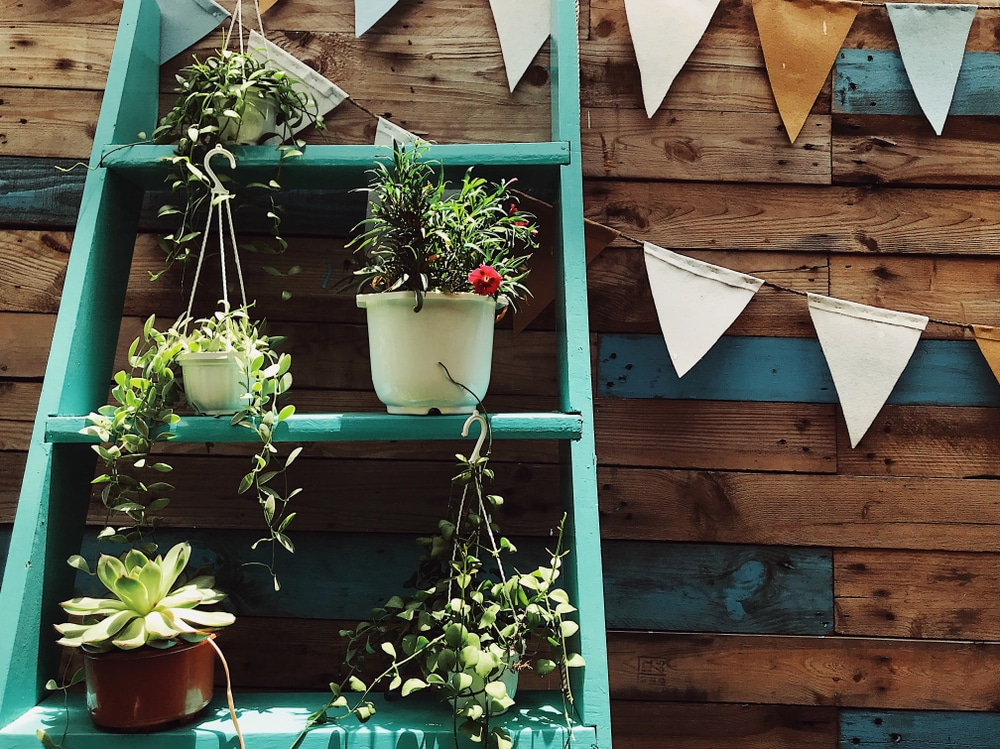 A ladder used as shelving for plant pots