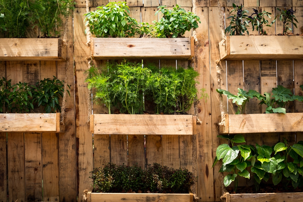 Vegetables grown vertically using wooden boxes