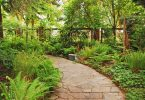 garden path with ferns either side