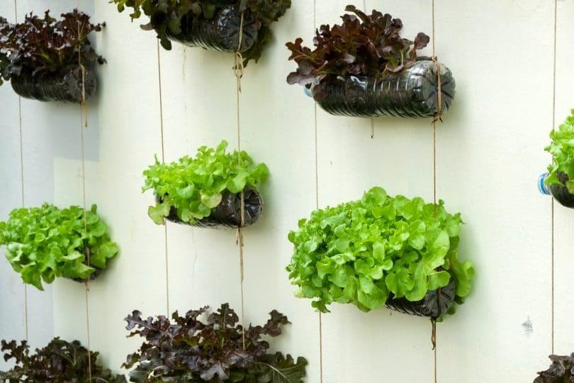 18 Smart Vertical Garden Ideas For Small Spaces Upgardener