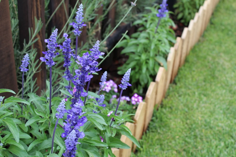 Garden borders make an ideal area to plant