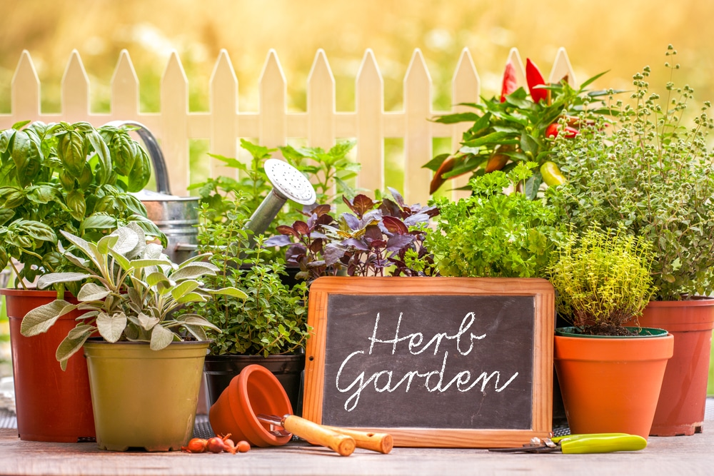 A collection of herbs amongst a watering can