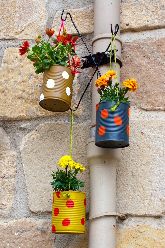 Spotted tin cans painted and used as plant pots