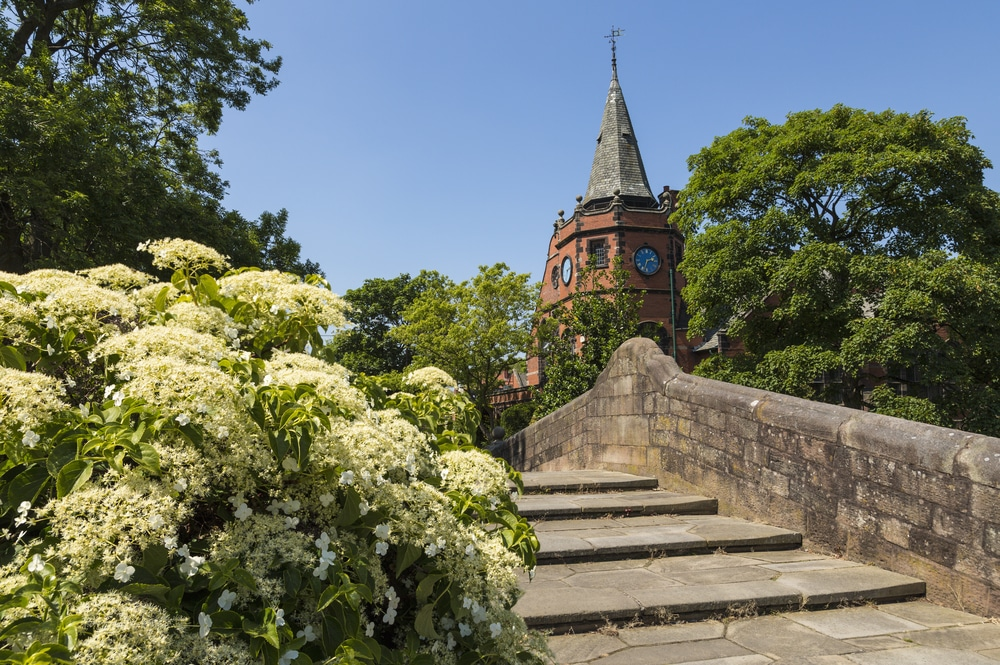 Climbing Hydrangea on a Bridge with a church in the background
