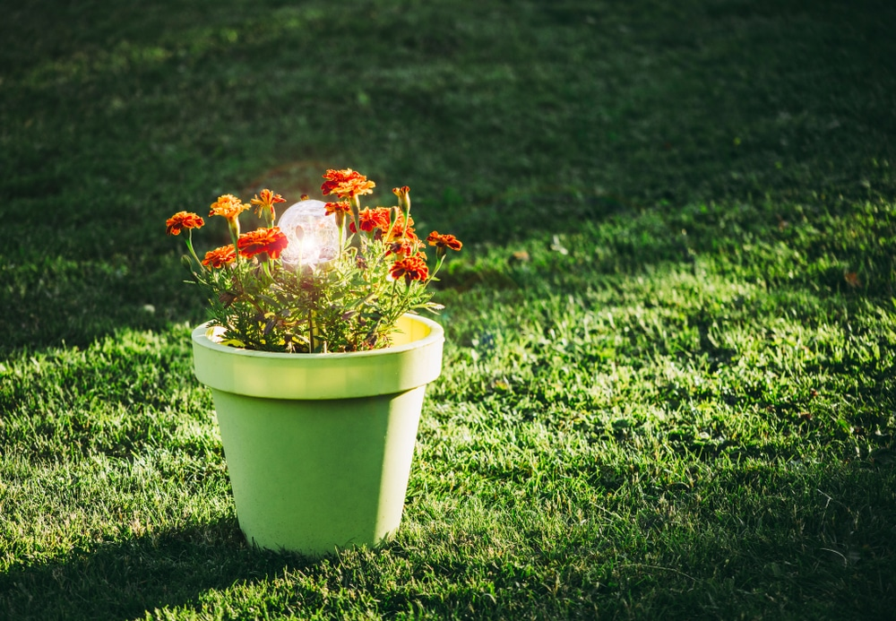 a light inside a potted plant