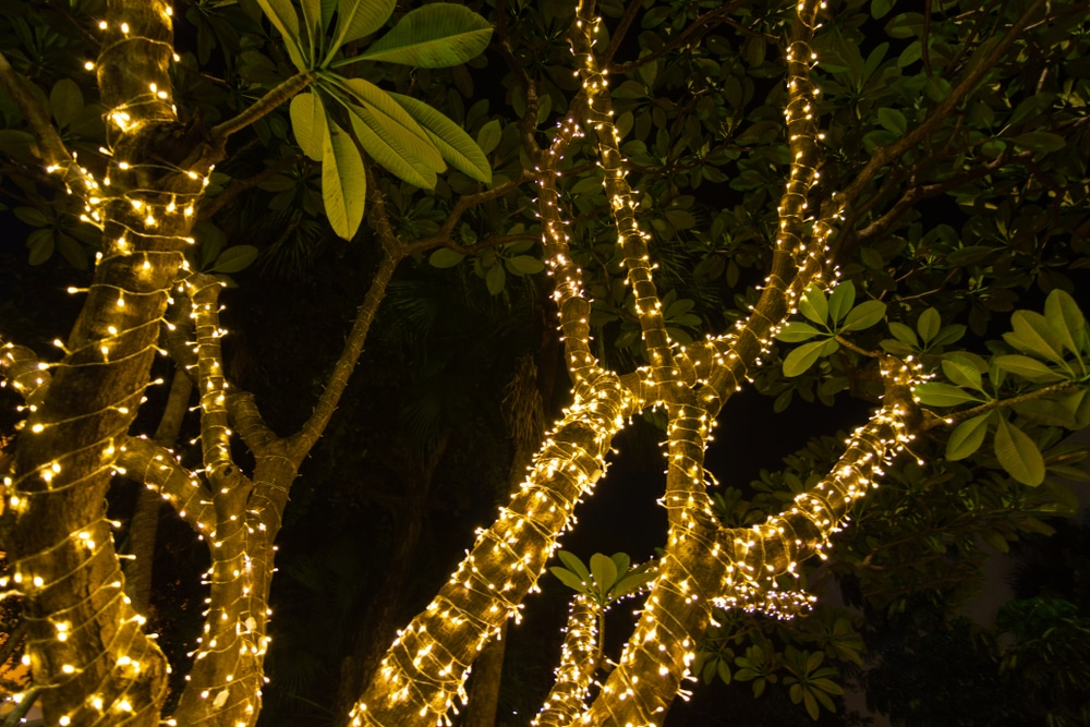 fairy lights wrapped around tree branches