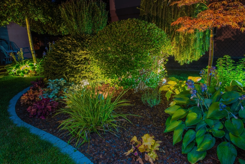 garden border plants illuminated by lighting