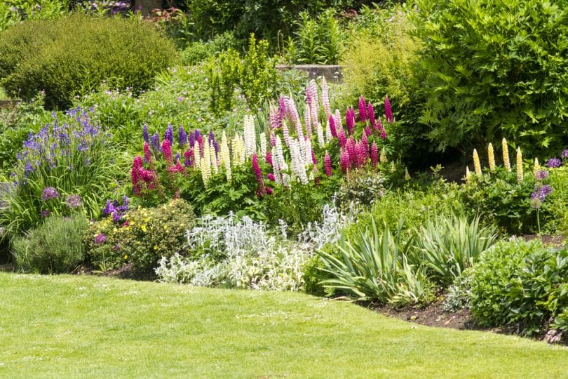 stunning border in english countryside garden