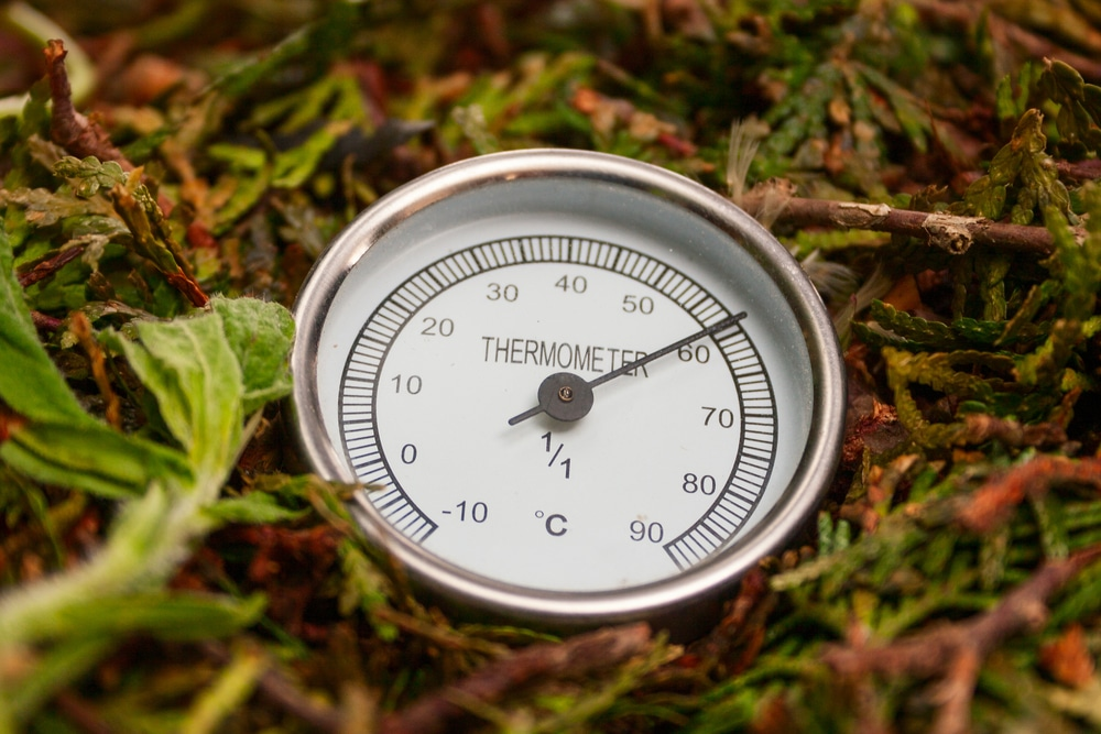 thermometer placed in compost