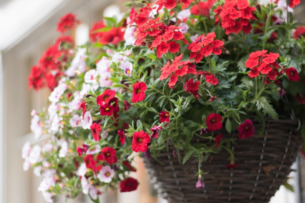 small verbena flowers in a dark brown basket
