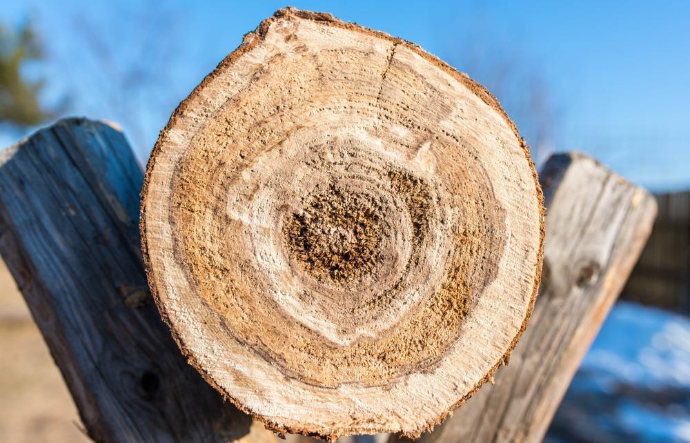 log sat in a sawhorse