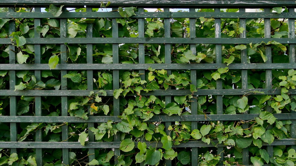 green lattice fence that blends into the bushes
