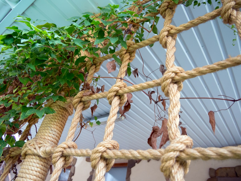 a rope border with greenery
