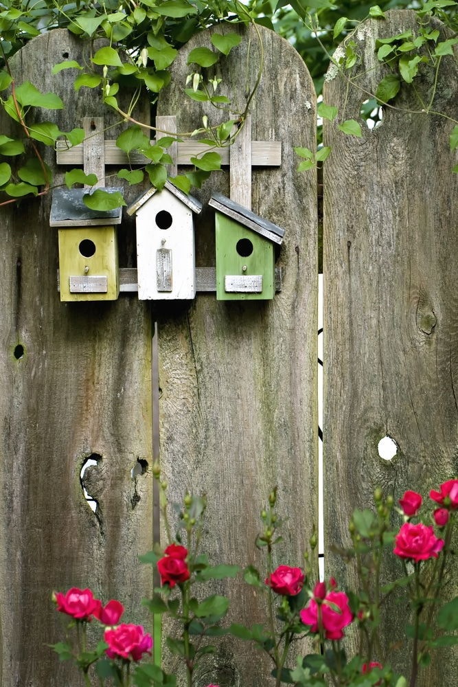 birdboxes fixed to a timber fence