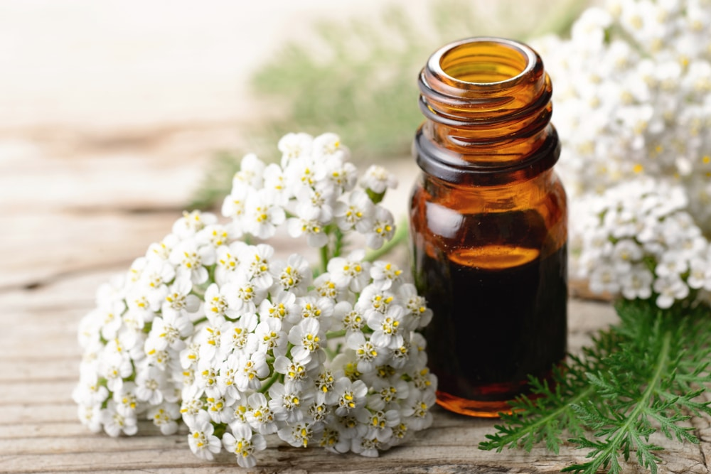 Yarrow on table with essential oil bottle