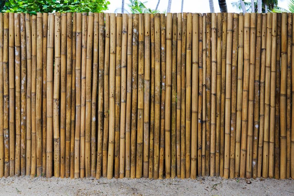 bamboo garden boundary