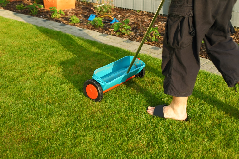 spreader being pushed along a garden lawn