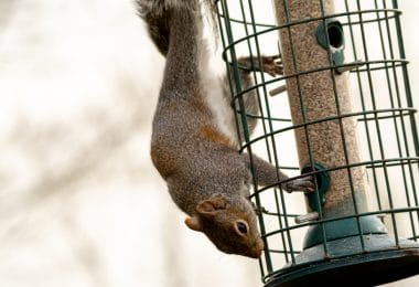 squirrel sat on a bird feeder
