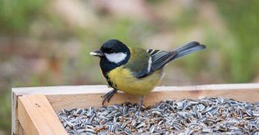 beautiful bird sat on a garden table