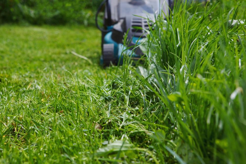 lawn mower cutting long grass