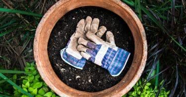 gardening gloves sat in a plant pot