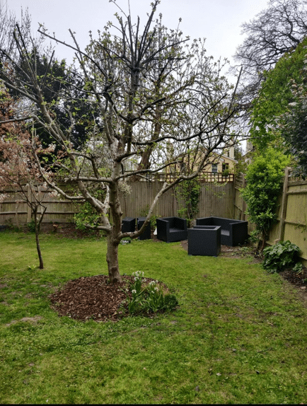 uncut lawn with tree in centre and furniture scattered at end of garden