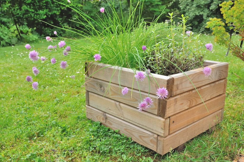 small softwood planter sat on a lawn with purple plants and flowers