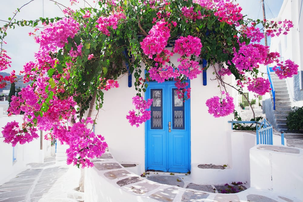 traditional greek home exterior with white walls and pink flowers