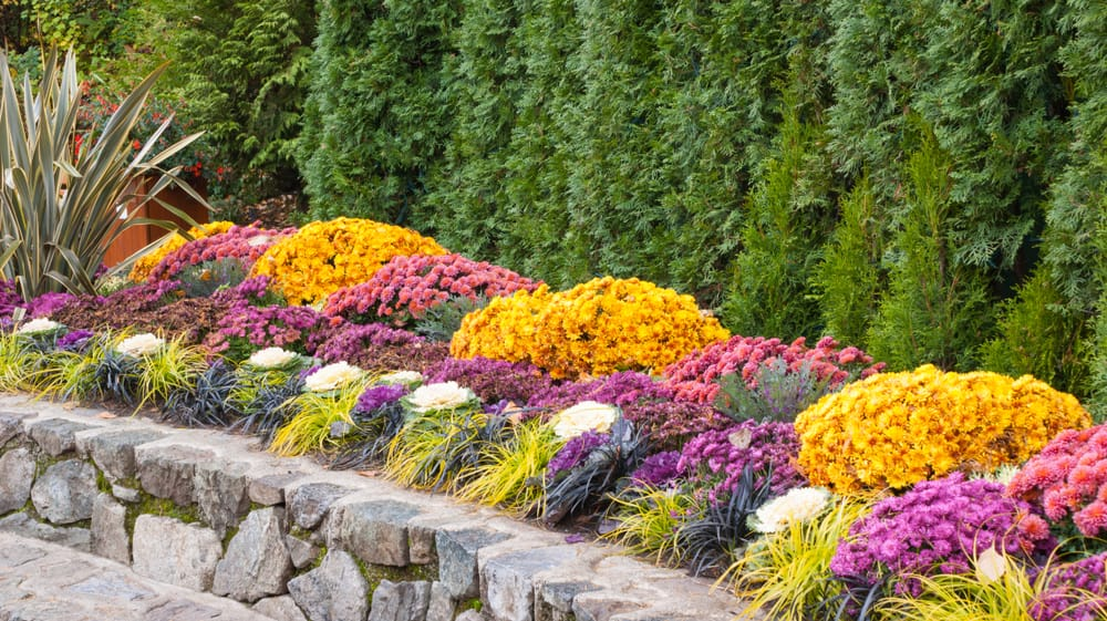 walled garden border with gold and pink flowers