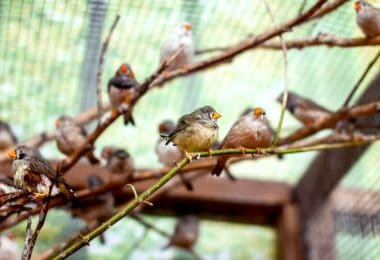 multiple birds sat on branches inside an aviary