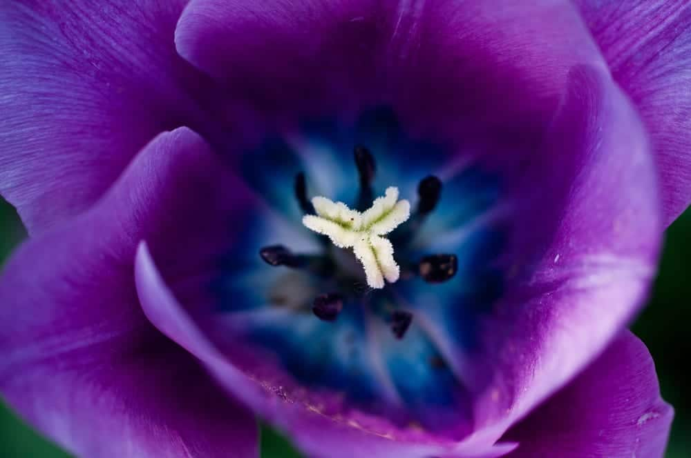 close up of a purple flower