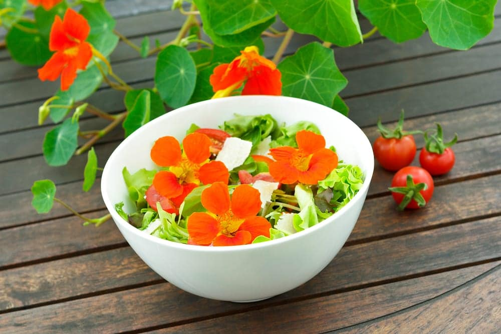 a salad bowl topped with nasturtiums