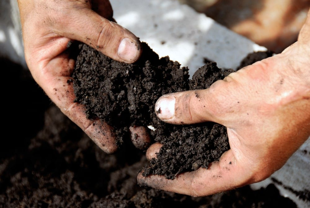 close up of mans hands in soil
